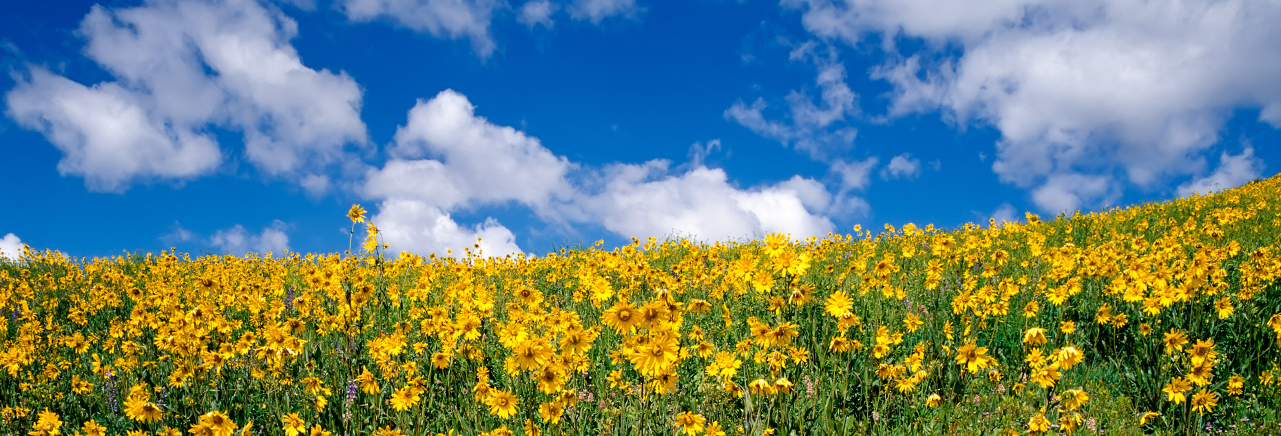 colorado_wildflowers_0002-DUP.jpg